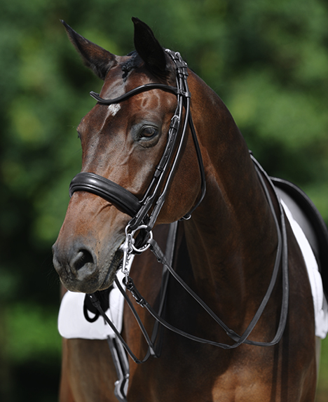 Passier Boston Rolled Double Bridle