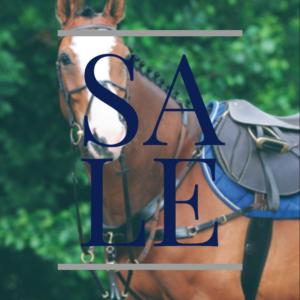 Horse Sale